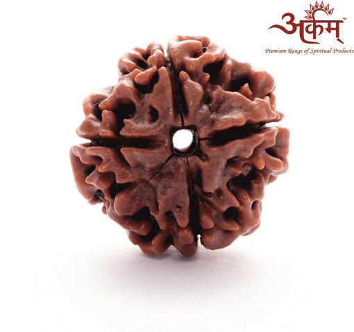 Picture of ARKAM Premium 4 Mukhi Rudraksha / Original Nepali Four Mukhi Rudraksha / Natural 4 faced Rudraksha (Brown) with detailed Puja and wearing instructions
