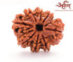 Picture of ARKAM Premium 8 Mukhi Rudraksha / Original Nepali Eight Mukhi Rudraksha / Natural 8 faced Rudraksha (Brown) with detailed Puja and wearing instructions