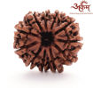 Picture of ARKAM Premium 11 Mukhi Rudraksha / Original Nepali Eleven Mukhi Rudraksha / Natural 11 faced Rudraksha (Brown) with detailed Puja and wearing instructions