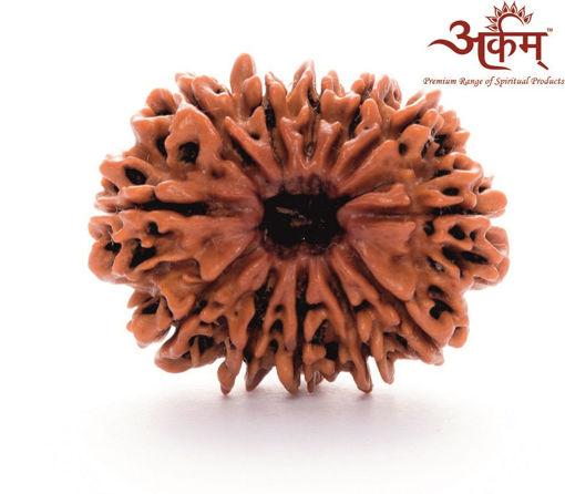 Picture of ARKAM Premium 12 Mukhi Rudraksha / Original Nepali Twelve Mukhi Rudraksha / Natural 12 faced Rudraksha (Brown) with detailed Puja and wearing instructions