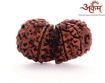 Picture of ARKAM Premium Gauri Shankar Rudraksha / Original Nepali Gauri Shankar Rudraksha / Natural Gauri Shankar Rudraksha (Brown) with detailed Puja and wearing instructions