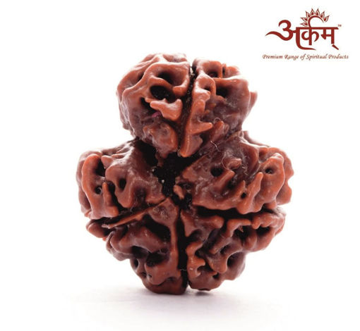 Picture of ARKAM Premium Savar Rudraksha / Original Nepali Savar Rudraksha / Natural Savar Rudraksha (Brown) with detailed Puja and wearing instructions