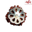 Picture of ARKAM Premium 3 Mukhi Rudraksha / Original Nepali Three Mukhi Rudraksha / Natural 3 faced Rudraksha (Brown) with Silver Chain (92.5% Sterling Silver) and Silver Pendant with  detailed Puja and wearing instructions