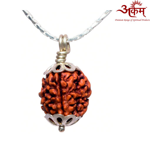 Picture of ARKAM Premium 3 Mukhi Rudraksha / Original Indonesian Three Mukhi Rudraksha / Natural 3 faced Rudraksha (Brown) with Silver Chain (92.5% Sterling Silver) and Silver Pendant with  detailed Puja and wearing instructions
