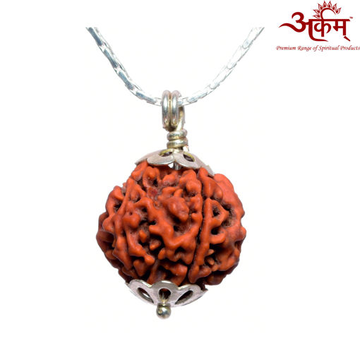 Picture of ARKAM Premium 5 Mukhi Rudraksha / Original Nepali Five Mukhi Rudraksha / Natural 5 faced Rudraksha (Brown) with Silver Chain (92.5% Sterling Silver) and Silver Pendant with  detailed Puja and wearing instructions