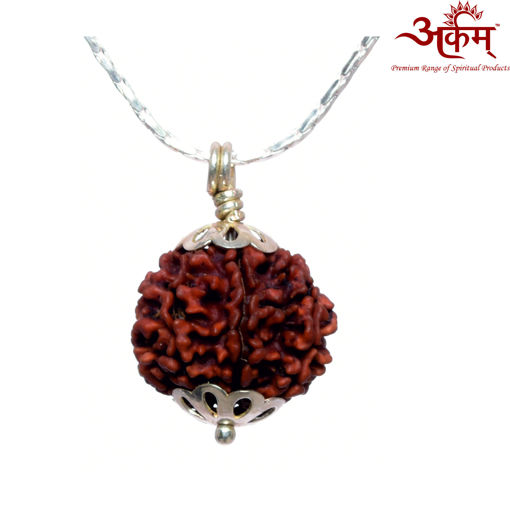 Picture of ARKAM Premium 7 Mukhi Rudraksha / Original Nepali Seven Mukhi Rudraksha / Natural 7 faced Rudraksha (Brown) with Silver Chain (92.5% Sterling Silver) and Silver Pendant with  detailed Puja and wearing instructions
