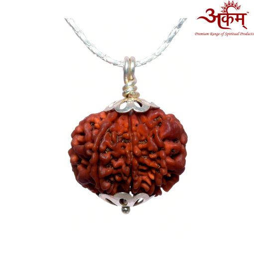 Picture of ARKAM Premium 8 Mukhi Rudraksha / Original Nepali Eight Mukhi Rudraksha / Natural 8 faced Rudraksha (Brown) with Silver Chain (92.5% Sterling Silver) and Silver Pendant with  detailed Puja and wearing instructions