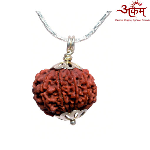 Picture of ARKAM Premium 10 Mukhi Rudraksha / Original Nepali Ten Mukhi Rudraksha / Natural 10 faced Rudraksha (Brown) with Silver Chain (92.5% Sterling Silver) and Silver Pendant with  detailed Puja and wearing instructions