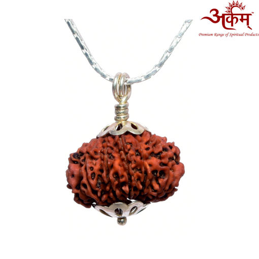 Picture of ARKAM Premium 12 Mukhi Rudraksha / Original Nepali Twelve Mukhi Rudraksha / Natural 12 faced Rudraksha (Brown) with Silver Chain (92.5% Sterling Silver) and Silver Pendant with  detailed Puja and wearing instructions
