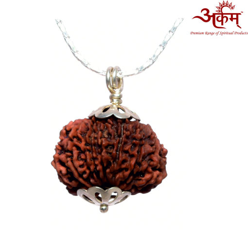 Picture of ARKAM Premium 14 Mukhi Rudraksha / Original Nepali Fourteen Mukhi Rudraksha / Natural 14 faced Rudraksha (Brown) with Silver Chain (92.5% Sterling Silver) and Silver Pendant with  detailed Puja and wearing instructions
