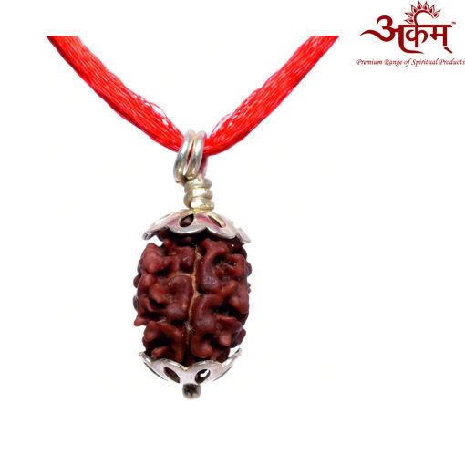 Picture of ARKAM Premium 2 Mukhi Rudraksha / Original Nepali Two Mukhi Rudraksha / Natural 2 faced Rudraksha (Brown) with Silver Pendant and detailed Puja and wearing instructions
