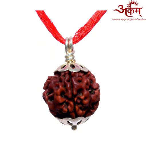 Picture of ARKAM Premium 4 Mukhi Rudraksha / Original Nepali Four Mukhi Rudraksha / Natural 4 faced Rudraksha (Brown) with Silver Pendant and detailed Puja and wearing instructions