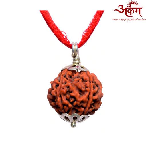 Picture of ARKAM Premium 5 Mukhi Rudraksha / Original Nepali Five Mukhi Rudraksha / Natural 5 faced Rudraksha (Brown) with Silver Pendant and detailed Puja and wearing instructions
