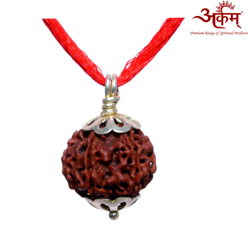 Picture of ARKAM Premium 6 Mukhi Rudraksha / Original Nepali Six Mukhi Rudraksha / Natural 6 faced Rudraksha (Brown) with Silver Pendant and detailed Puja and wearing instructions
