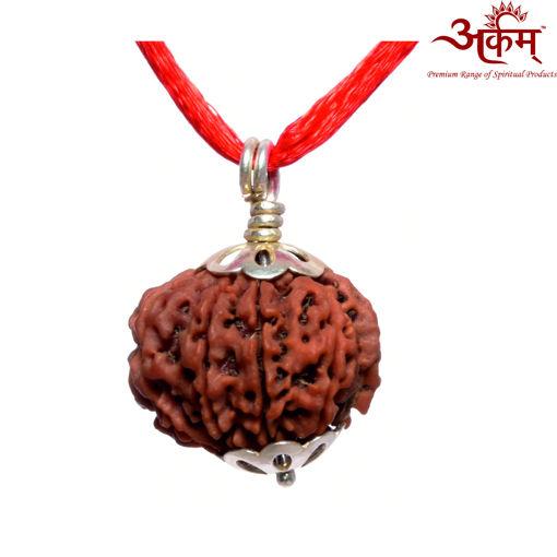 Picture of ARKAM Premium 9 Mukhi Rudraksha / Original Nepali Nine Mukhi Rudraksha / Natural 9 faced Rudraksha (Brown) with Silver Pendant and detailed Puja and wearing instructions