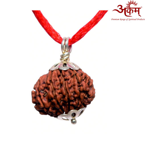 Picture of ARKAM Premium 11 Mukhi Rudraksha / Original Nepali Eleven Mukhi Rudraksha / Natural 11 faced Rudraksha (Brown) with Silver Pendant and detailed Puja and wearing instructions