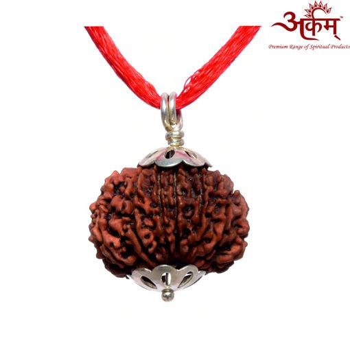 Picture of ARKAM Premium 14 Mukhi Rudraksha / Original Nepali Fourteen Mukhi Rudraksha / Natural 14 faced Rudraksha (Brown) with Silver Pendant and detailed Puja and wearing instructions