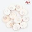 Picture of Arkam Gomti Chakra / Gomati Chakra / White Gomti Chakra / Original Premium Quality for Puja 12-15 mm - Set of 11 Pcs