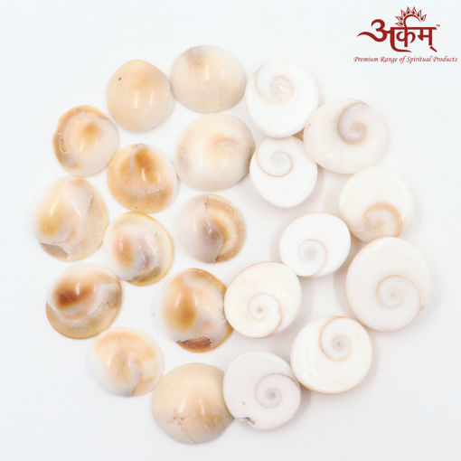 Picture of Arkam Gomti Chakra / Gomati Chakra / White Gomti Chakra / Original Premium Quality for Puja 12-15 mm - Set of 21 Pcs