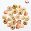 Picture of Arkam Gomti Chakra / Gomati Chakra / White Gomti Chakra / Original Premium Quality for Puja 22-25 mm - Set of 21 Pcs