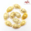 Picture of Arkam Yellow Kauri / Peeli Kodi / Yellow Kaudi / Pili Kauri / Premium Quality for Puja - Set of 11 Pcs