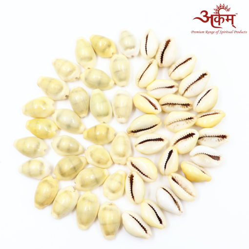 Picture of Arkam Yellow Kauri / Peeli Kodi / Yellow Kaudi / Pili Kauri / Premium Quality for Puja - Set of 51 Pcs